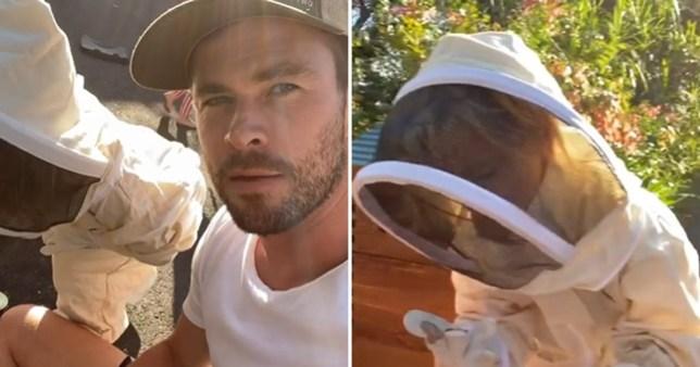 Chris Hemsworth beekeeping