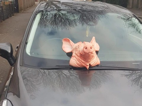 Pig's head dumped on police officer's car windscreen during coronavirus lockdown