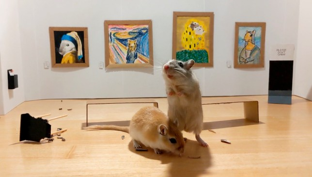 A couple stuck inside during the lockdown have made an adorable art gallery - for their GERBILS. See SWNS story SWLEgerbils. Marianna Benetti and her boyfriend Filippo Lorenzin, both 30, constructed the miniature exhibition last week to keep their pets entertained during quarantine. The tiny space was furnished with carefully curated gerbil themed takes on classic works of art - including the ?Mousa Lisa?. Marianna and Filippo also made mini benches, gallery assistant stools, large print guides, and a sign which read ?DO NOT CHEW?. Their two nine-month-old gerbils, Pandoro and Tiramisu, enjoyed browsing the gallery and nibbled their way through one of the delicately constructed chairs.