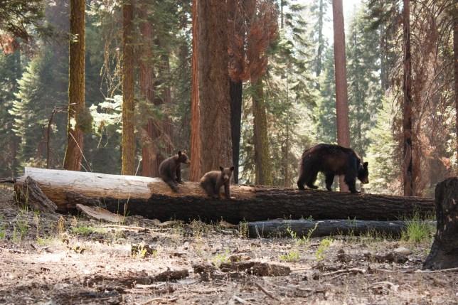 Photo Taken In United States, Yosemite Valley