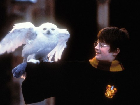 17 questions for your virtual Harry Potter pub quiz