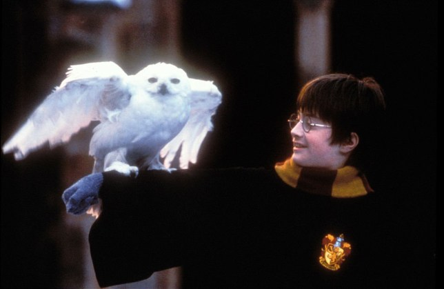 Daniel Radcliffe as Harry Potter, with his owl Hedwig perched on his arm