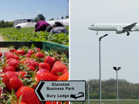 Plane carrying Romanian fruit and veg pickers to keep food on our tables arrives