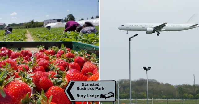 Plane carrying fruit and veg pickers arrives at Stanstead