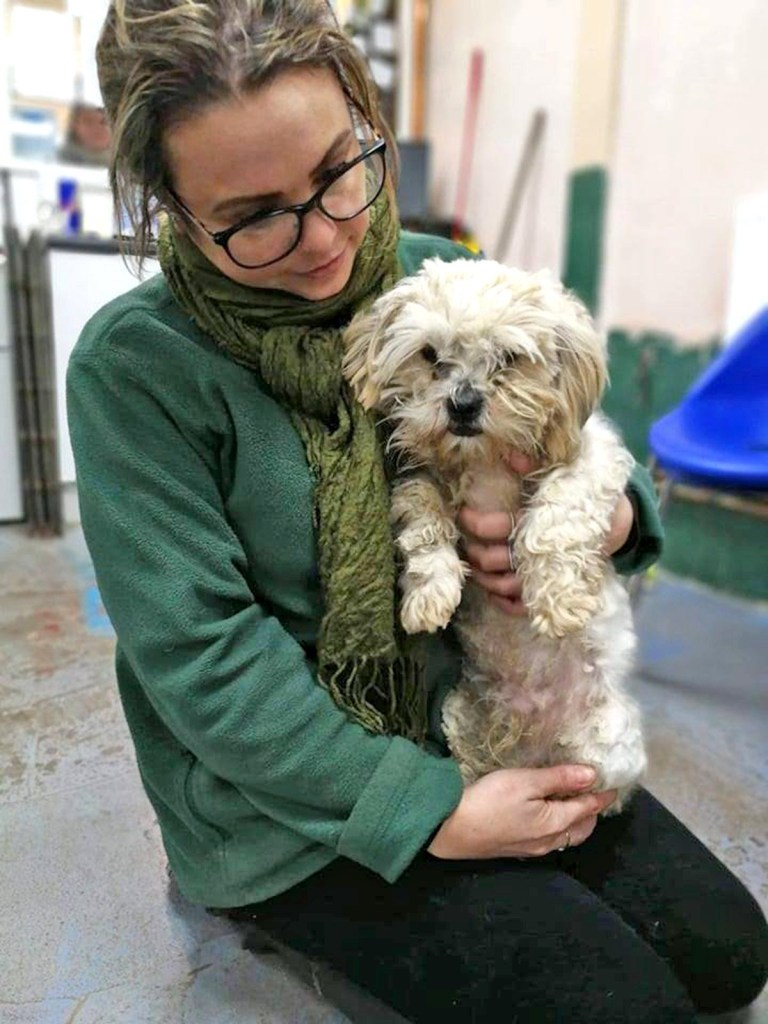 (Picture: Oakwood Dog Rescue)