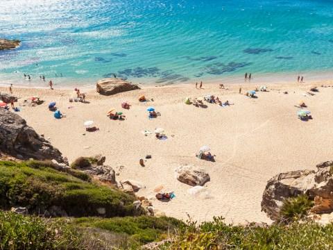 Spain sprays beach with bleach killing off wildlife