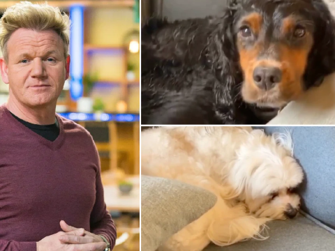 Gordon Ramsay blanked by dogs amid coronavirus lockdown after backlash from neighbours
