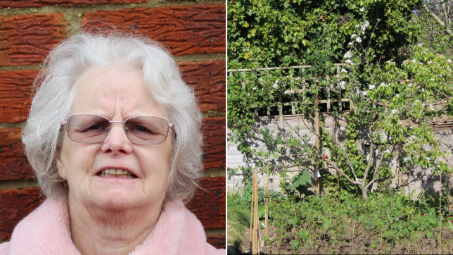 Julie is isolating at home but is watching 225 trees being planted in her garden by her neighbour