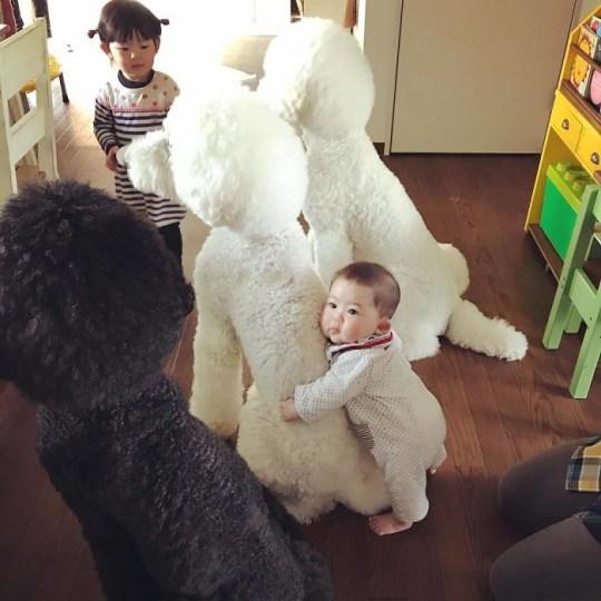 Baby hugging poodle