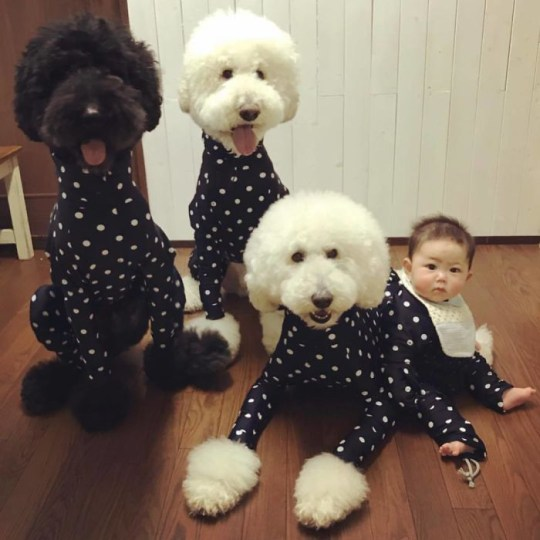 Baby with poodles wearing polka dot onesies