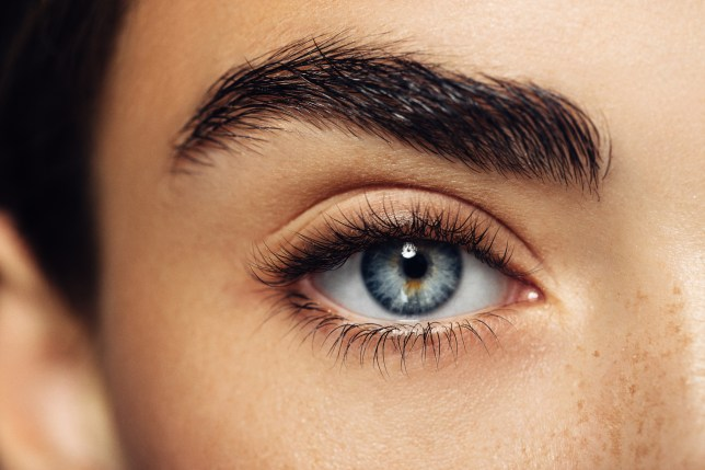 Close up of woman's eye and eyebrow.