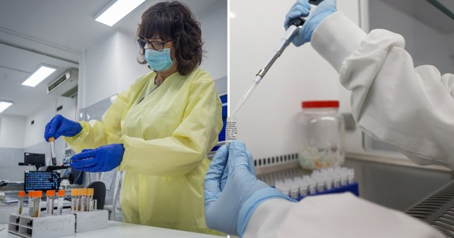 Scientists said that preliminary results from lab tests showed the antibodies could stop human cells being infected.