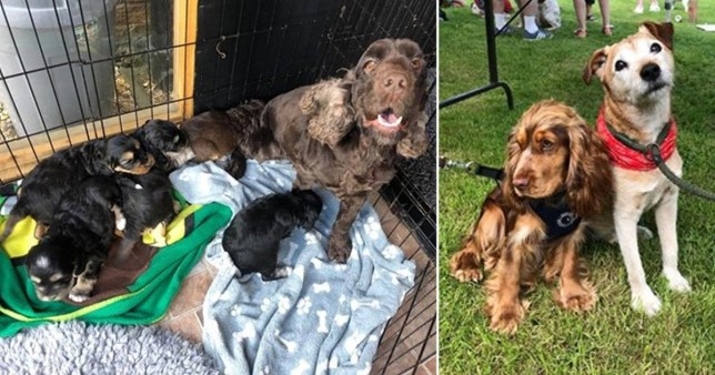 The thieves drove off with 22 dogs and puppies