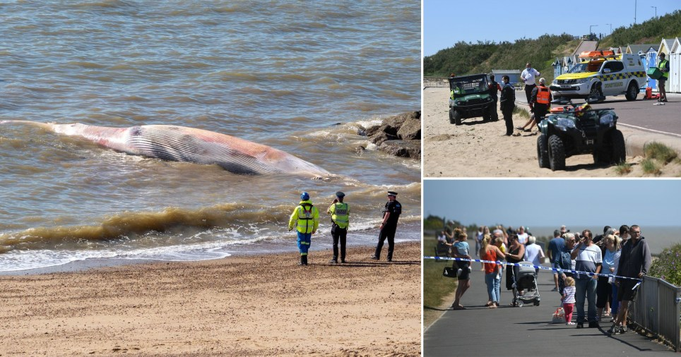 A 40 foot whale has washed up and died on an Essex beach.