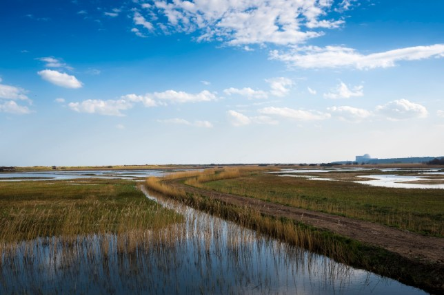 Picture of Minsmere