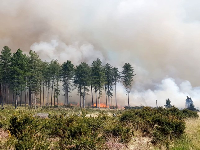 Wareham Forest fire, Dorset, is being fanned by strong winds