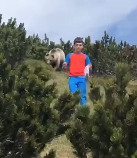 METROGRAB 12-year-old boy has close encounter with bear while picking pine cones