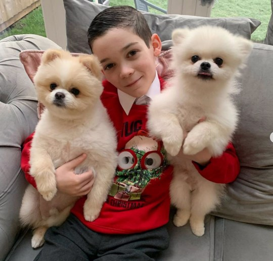 Hollies son London with the dogs