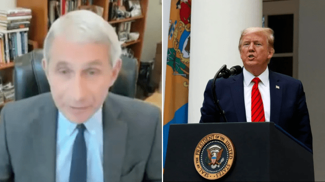 Photo of Dr Anthony Fauci next to photo of Donald Trump