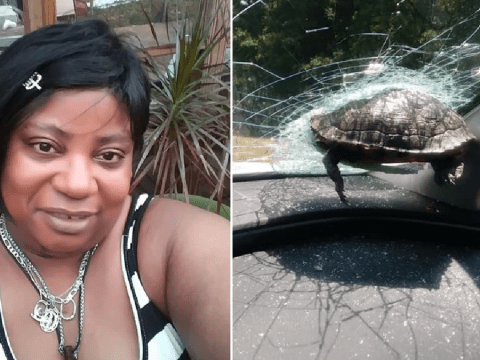 Turtle smashes through car windshield and nearly decapitates passenger