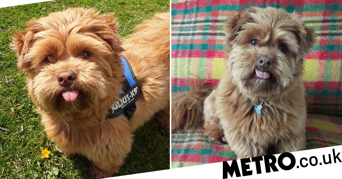 Adorable dog from Leeds has his tongue permanently stuck out