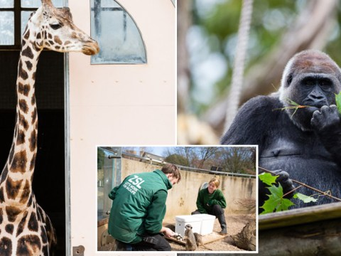 London Zoo could be forced to close for good if it can't find £25,000,000