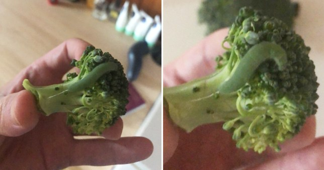 Finding the caterpillars in his broccoli
