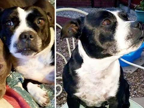 Dog stolen and beheaded before being dumped on owner's doorstep