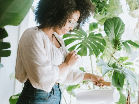 How to make sure your houseplants survive the heatwave