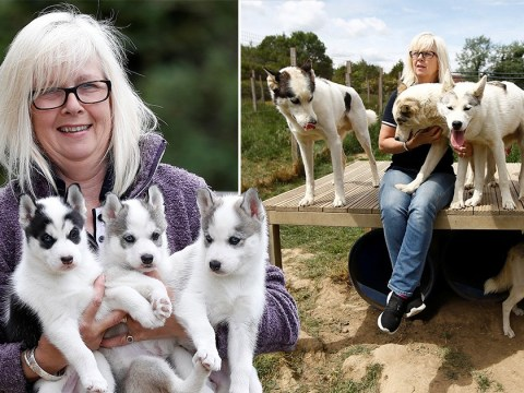 Dog breeders see huge surge in demand for puppies during lockdown