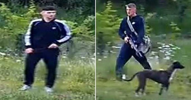 Hunt for men accused of shooting and killing two swans with air rifle