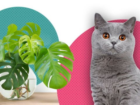 Some of Instagram's favourite houseplants are toxic to cats