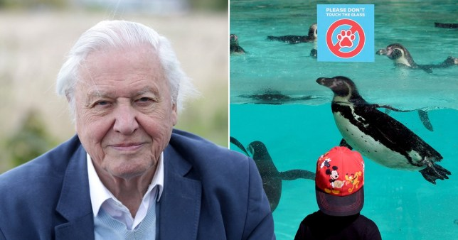 Sir David Attenborough steps in to help safe London Zoo from extinction amid the coronavirus pandemic.