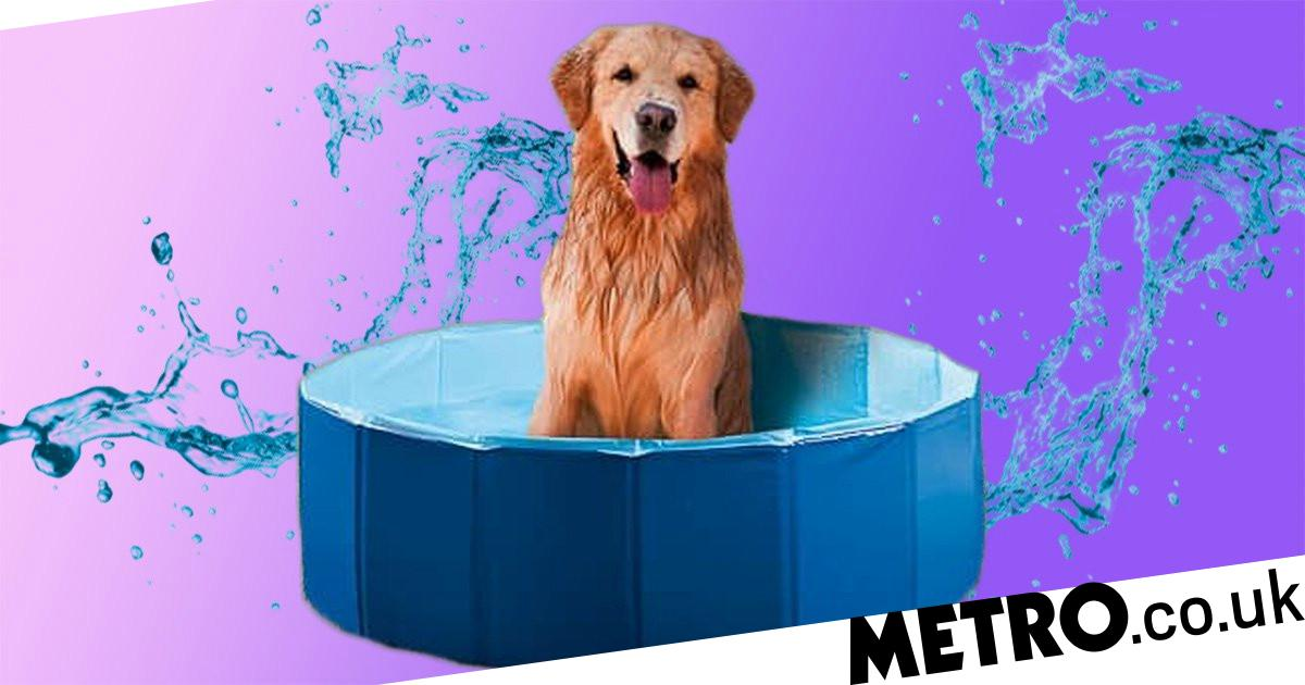 B&M is selling a dog paddling pool, so your pooch can cool off
