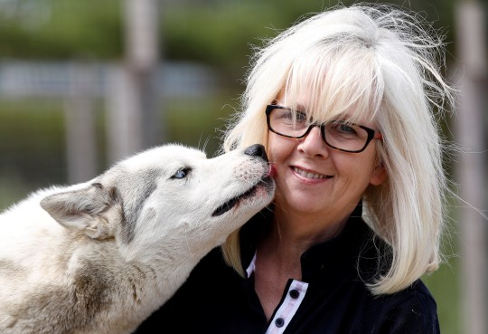 Siberian Husky breeder Christine Biddlecombe receives a lick from one of her dogs at her home, in Tonbridge, Britain, June 4, 2020. Picture taken June 4, 2020. REUTERS/Peter Nicholls