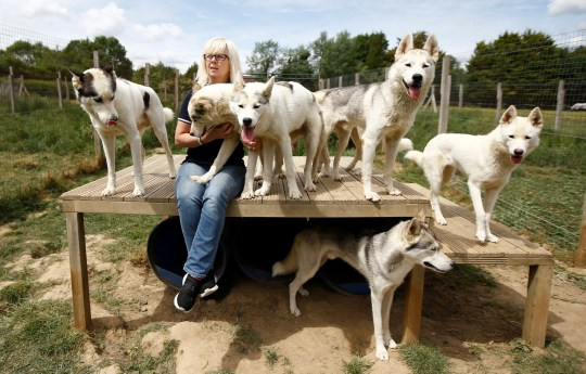 Siberian Husky breeder Christine Biddlecombe sits with some of her dogs at her home, in Tonbridge, Britain, June 4, 2020. Picture taken June 4, 2020. REUTERS/Peter Nicholls