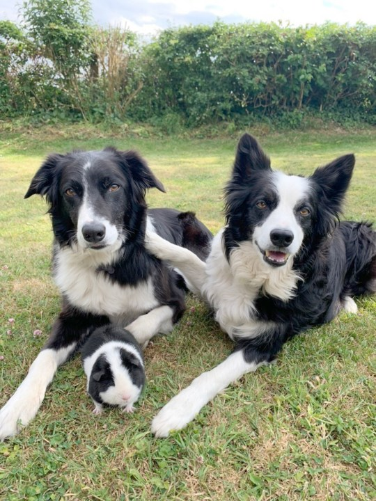 Margo with Border Collies Jenson and  George