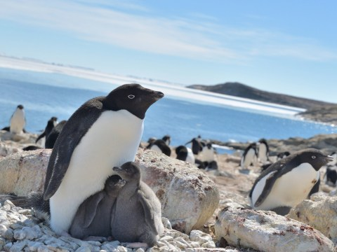 Global warming could actually be good for penguins, study suggests