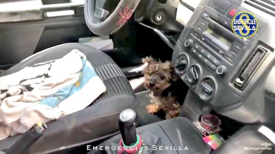 Moment Yorkshire terrier dog is saved by police breaking into car window after it was left for hours in a car as temperatures reached 40C.