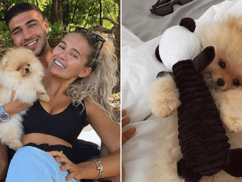 Breeder who sold Tommy Fury dog insists he was healthy as Mr Chai dies days after being taken home