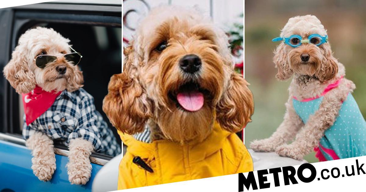 Adorable dog who models for big brands has become an Instagram sensation