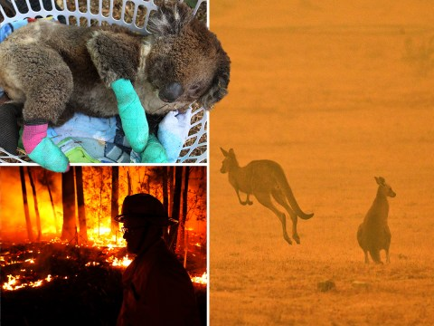 Nearly 3,000,000,000 animals killed or displaced in Australia's wildfires