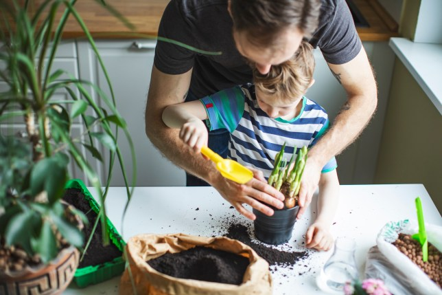 Father and son planting at home