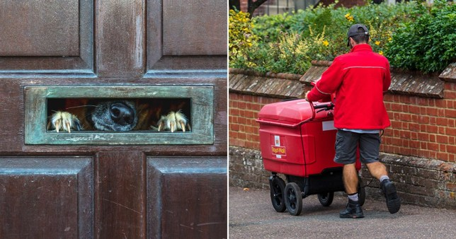 A Royal Mail worker carrying a trolley with post next to a dog waiting at a post box.