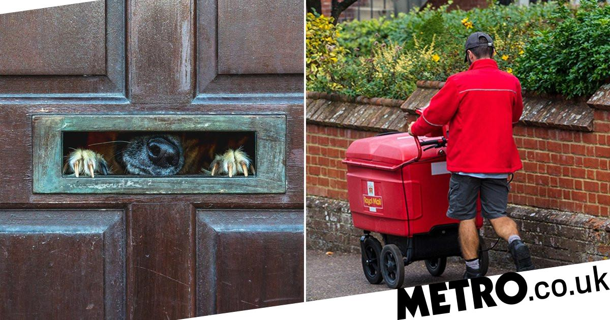 Postman's hand 'wouldn't stop bleeding' after dog bite as calls for action grow