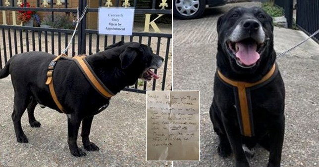 A Labrador dog left outside kennels with a note