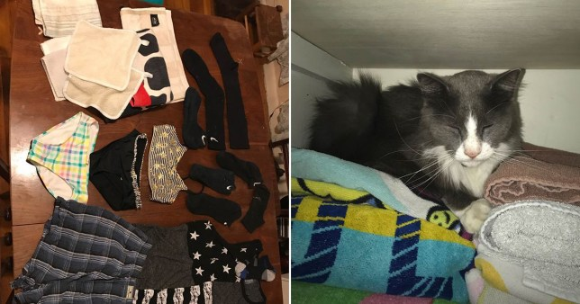 cat keeps stealing items from around his neighbourhood