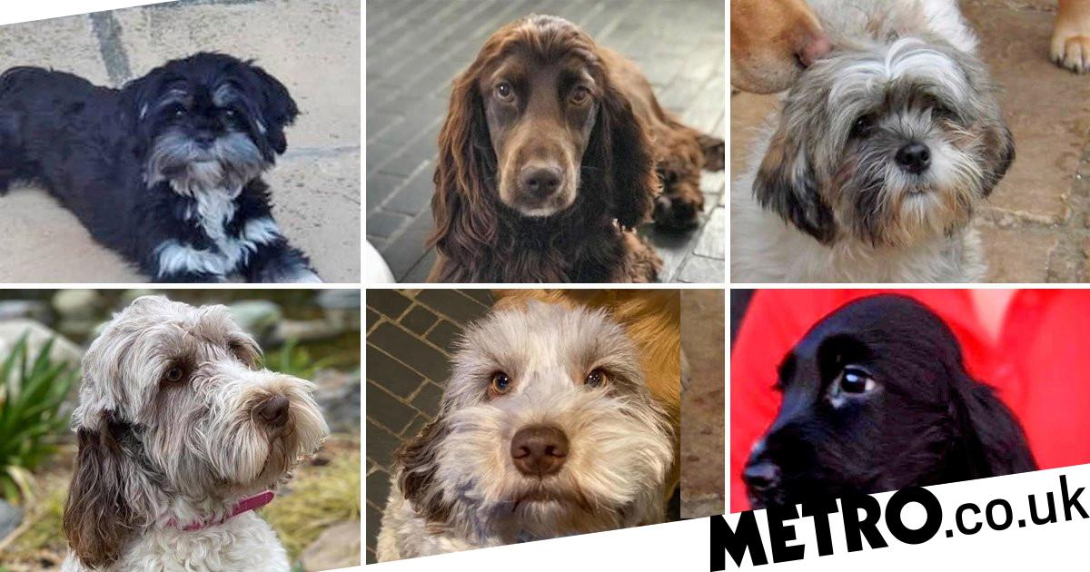 Family offer £4,000 reward after 17 dogs and puppies stolen from kennels