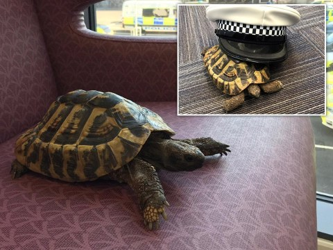 Tortoise wanders into police station five days after going missing