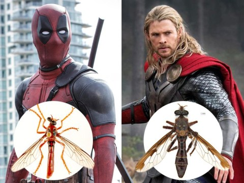 Newly-discovered fly species named after Marvel superheroes because why not?
